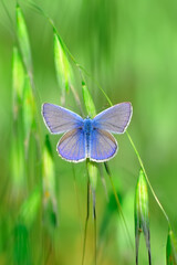 Printed kitchen splashbacks Butterfly Closeup beautiful butterfly sitting on the flower in a summer garden