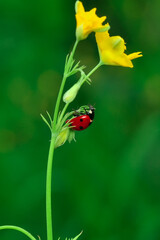 Poster Butterfly Beautiful ladybug on leaf defocused background