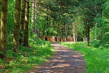 Papiers peints Vert Droga wśród drzew