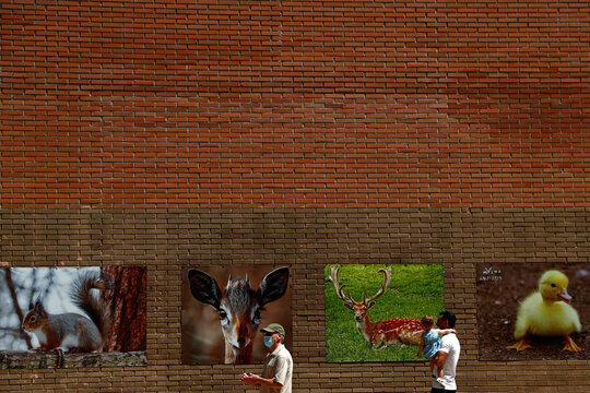 People wearing protective face masks walk by pictures of animals hanging on a wall, in Madrid