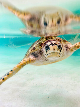 Turtle swimming in shallow ocean water