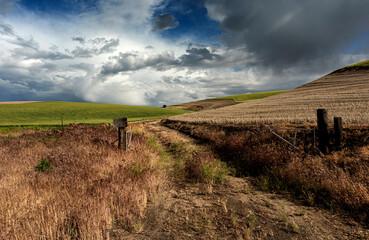 Farm Lane in Eastern Oregon Surrounded by Wheat Fields Taken in Spring
