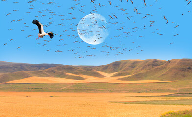 """Flock of White Storks in flight with white full moon """"Elements of this image furnished by NASA"""