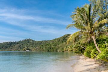 Fototapeta palm trees on the beach, Koh Mak beach, Koh Mak Island , Thailand.