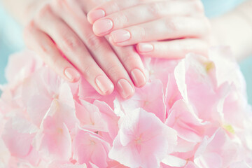 Beautiful Healthy nails. Manicure, Beautiful Woman's hands, Spa. Female hands with beautiful natural pink french elegant manicure on pink hydrangea flower. Soft skin, skincare. Salon, treatment.