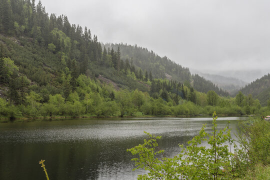 View of a mountain lake in foggy weather. On the opposite bank is a mountain with coniferous forest.