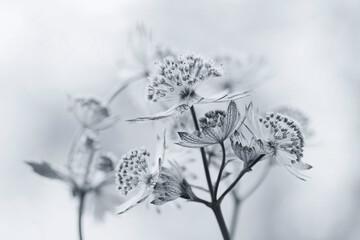 Obraz Białe kwiaty - Jarzmianka - fototapety do salonu