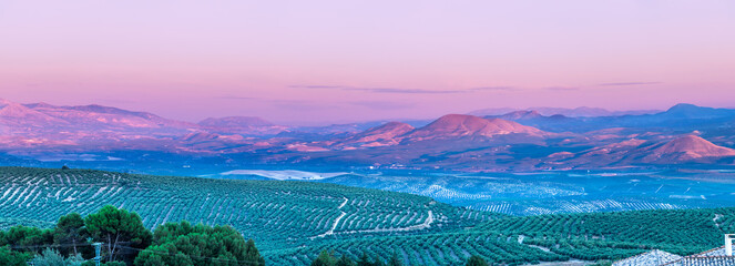 Photo sur Aluminium Lilas View at sunset of olive tree fields with Cazorla mountains in the background in Baeza village, Jaen, Andalusia, Spain