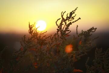 Papiers peints Jaune de seuffre Sunset