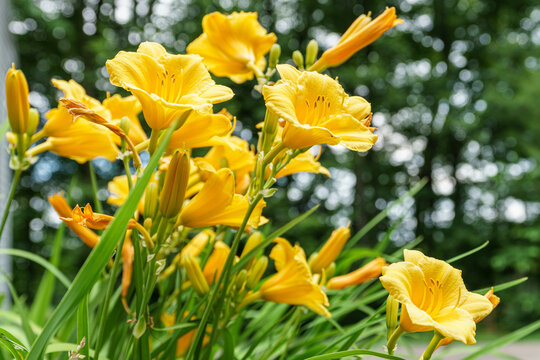 New England summer flowers / blooms / petals