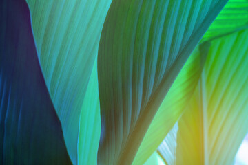 closeup nature view of green leaf on background and sunlight, fresh wallpaper banner concept