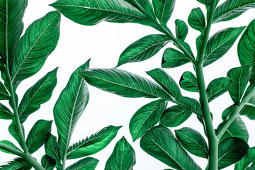 Wall Mural - closeup nature view of green leaf isolated on white background