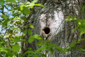 Bird nest in a tree trunk