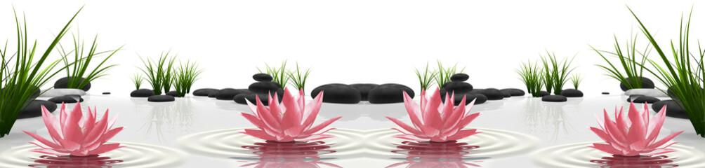 Poster de jardin Nénuphars lilie wodne na kamieniach | water lilies on stones