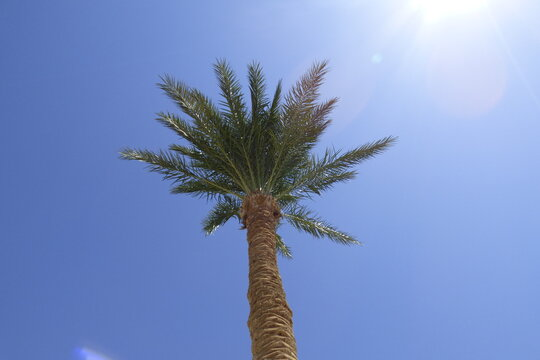 Palme bei blauem Himmel