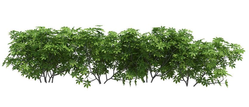 3d Render Brush Tree Isolated  on white
