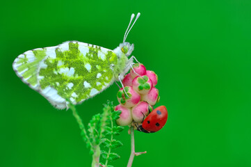 Closeup beautiful butterfly sitting on the flower in a summer garden