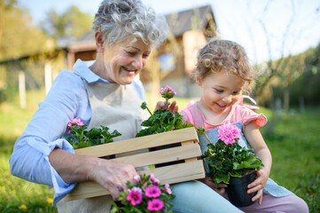 Senior grandmother with small granddaughter gardening outdoors in summer.