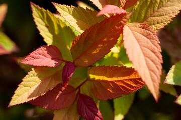 Liść jesień kolorowy