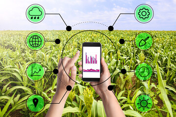 Modern agriculture. Woman with smartphone in corn field and icons, closeup