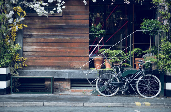 A beautiful inner city urban garden with a blank wooden rustic wall and bicycle parked outside. perfect for mock up or product compositing. urban gardeners. city greener and gardens.