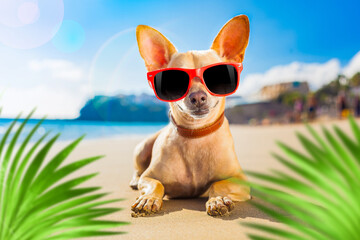 Papiers peints Chien de Crazy chihuahua summer dog