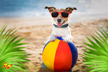 Stores à enrouleur Chien de Crazy dog at the beach and ocean with plastic ball