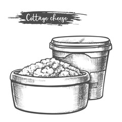 Dairy products, cottage cheese sketch, milk food