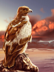 eagle sitting on a rock by the sea at sunset - color image