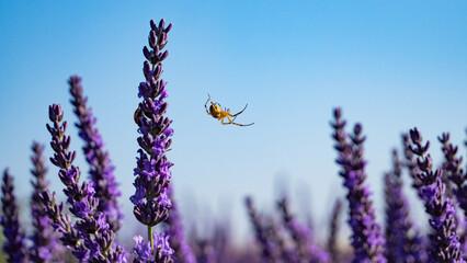 Tuinposter Lavendel gros plan sur une araignée et les fleurs de lavandes