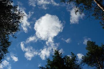 Looking skyward to tree tops Fotobehang