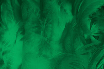 Beautiful feather color light green pattern texture background