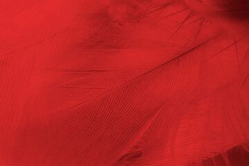 Beautiful dark red feather pattern texture background