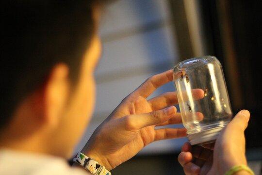 Fireflies caught in a jar