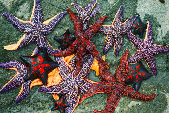 Colorful starfish collection on the rock