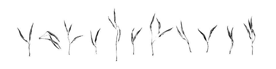 Set of hand drawn wild plants. Outline herbs with leaves painted by ink. Black isolated sketch vector on white background