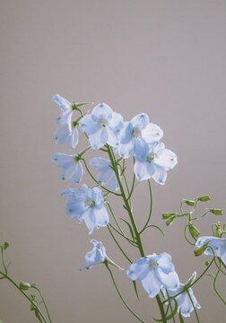 blue flower blossom on white background