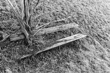 Old wood bench in the mountains with a tree that grew through it