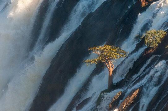 Baobab tree in the middle of he Ruacana waterfall