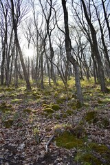 Fototapeta arrival of spring in the forest