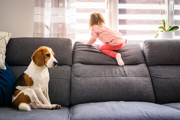 Little baby girl with beagle dog sitting on the sofa at home.