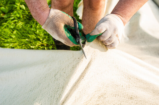 Male hands in gloves cut geotextiles with scissors in the garden.