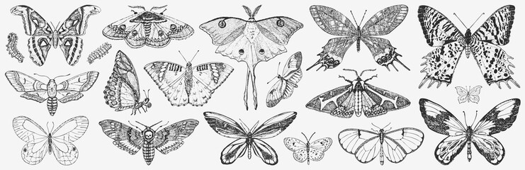 Butterfly or wild moths insects. Mystical symbol or entomological of freedom. Engraved hand drawn vintage sketch for wedding card or logo. Vector illustration. Arthropod animals.