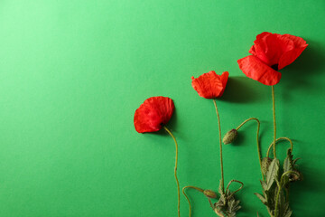 Beautiful red poppy flowers on green background, flat lay. Space for text