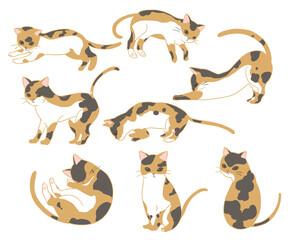三毛猫(線無し)