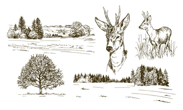 Rural landskape, forest and meadow with deer. Hand drawn set.