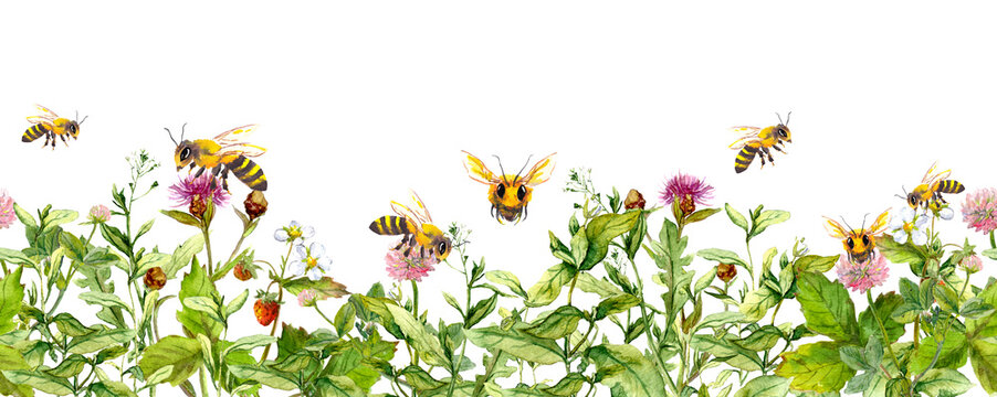 Honey bees in meadow flowers, summer grasses. Seamless floral border. Watercolour