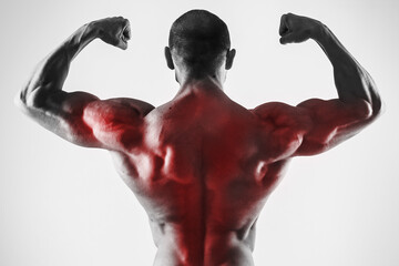 Specialization for back muscles in a bodybuilidng