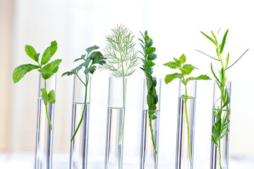 Test Tubes and glass mortarwith small plants Isolated on white, herbal medicine or Genetically Modified Organisms
