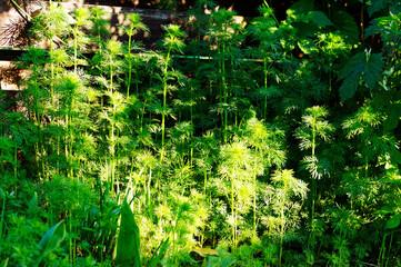 Świeże zielone rośliny w świetlne słonecznym